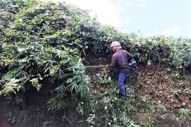草刈り 作業風景 株式会社ジオグリーン