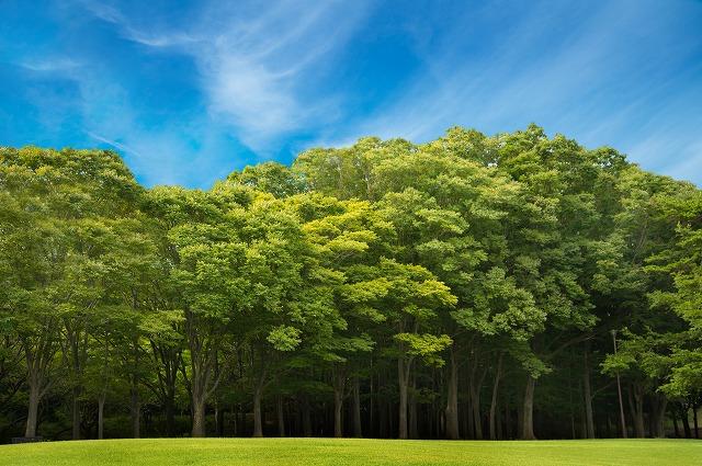 植林造林 株式会社ジオグリーン